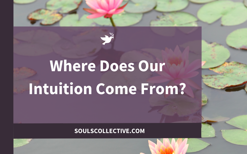 Where Does Our Intuition Come From?